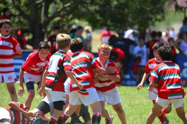 XII Encuentro Nacional de Rugby Infantil Luciano Carrara - Jockey Club Córdoba Rugby - Noviembre 2014 - 89451