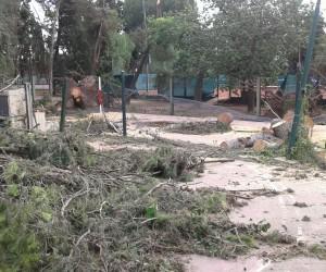 Relevamiento daños tormenta lunes 15 de febrero 2016 - Jockey Club Córdoba - Sede Country - IMG-20160217-WA0036